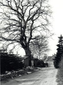Alte Straße