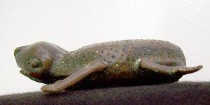 Frosch, ein Fruchtbarkeitssymbol