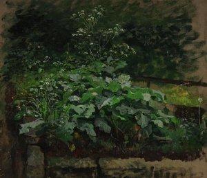 o.T. (Pflanzen-Studie)