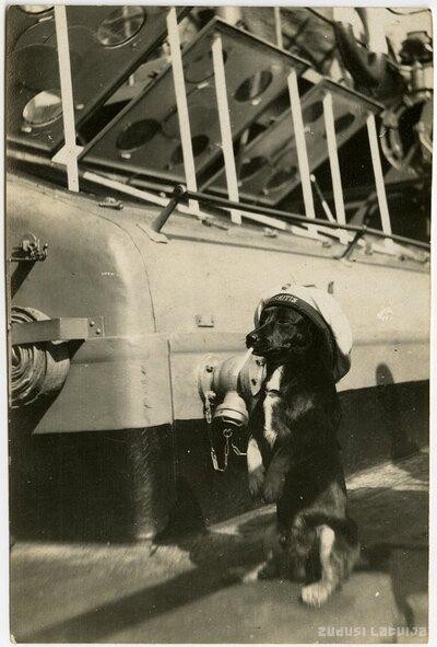 Suns kara jūrnieka cepurē