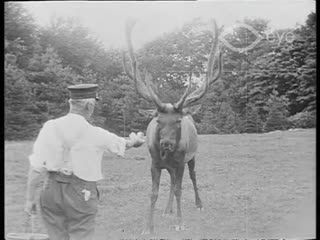 Biography of a Stag