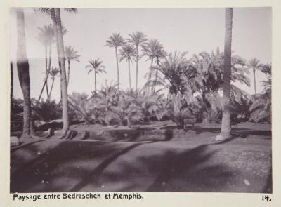Fotografi. Landskap mellan Badrashin och Memfis, Egypten.