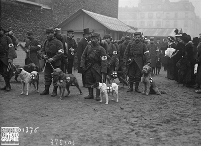 FRANCE - GUERRE - CHIENS SANITAIRE