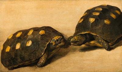 Studie van twee Braziliaanse schildpadden