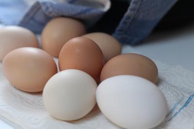 Κουνέλι αυγοξιθκιά