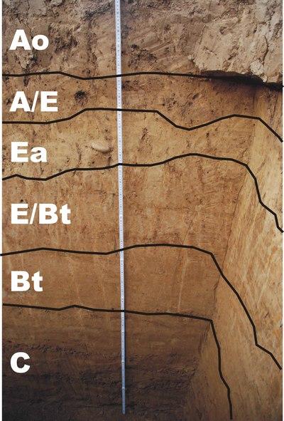 Situl arheologic de la Sita Buzăului - Malul Dinu Buzea