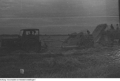Landwirtschaft, MTS Ernst Putz Meissen - Schletta, Ackerbau und Ernte, Pferde, August - September 1956