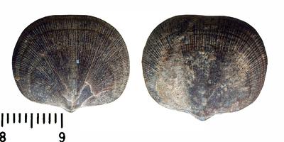 lubjakivi