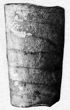Mixosiphonoceras estonicum Stumbur