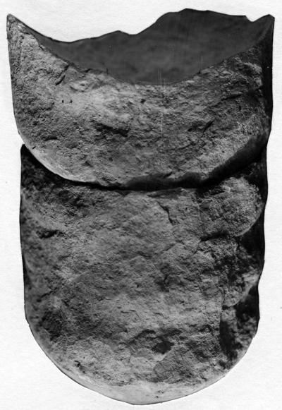 Ephippiorthoceras magnum Stumbur