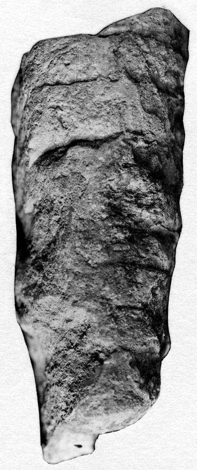 Endoceras iucundum Stumbur, 1956