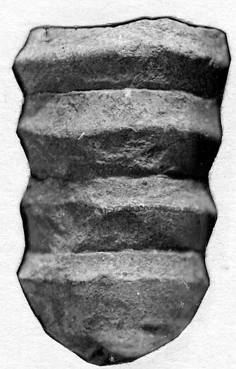 Dawsonoceras compactum Stumbur