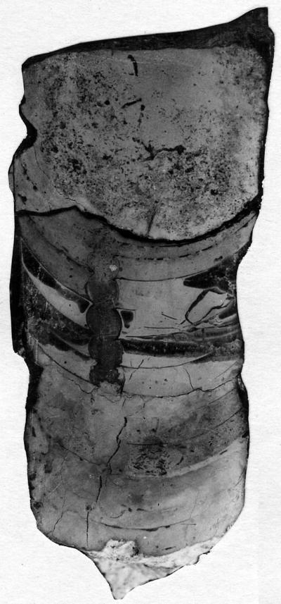 Ormoceras veteranum Stumbur