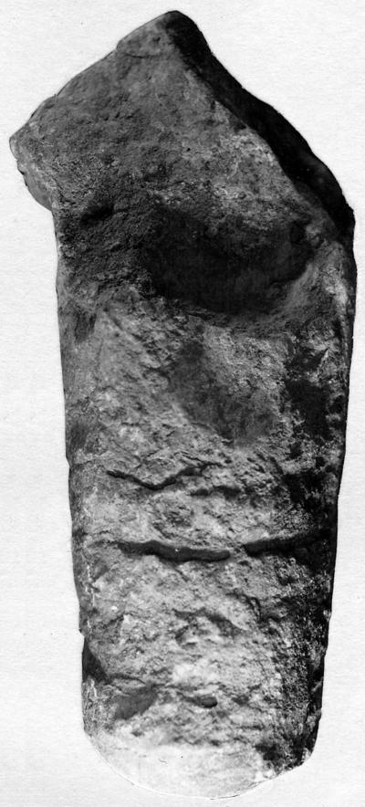 Ormoceras saxbyense Stumbur