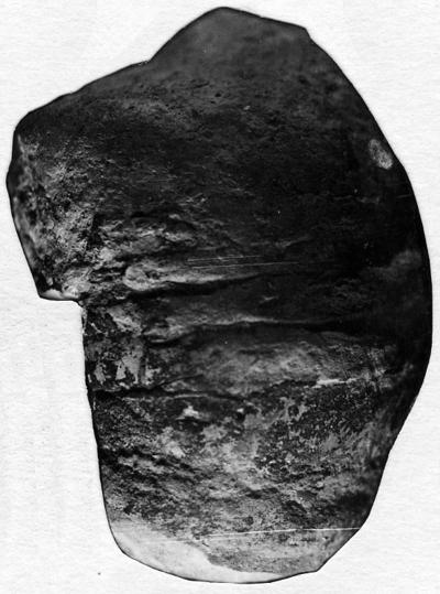 Protophragmoceras sphinx (Eichwald)