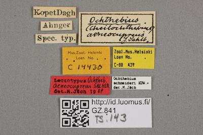 Ochthebius aenocupreus J. Sahlberg, 1903