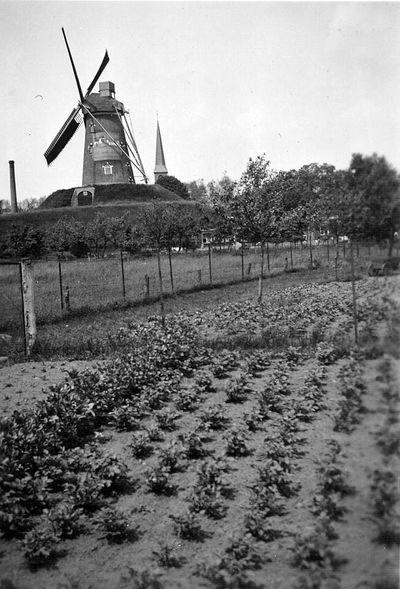Uitkijkpost op de molen van Navis te Bredevoort in 1940. Uit het boek Aalten in Oorlogstijd van J.G. ter Horst