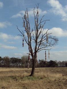 De Stichting Kunst in Putten (SKIP) organiseerde in 2011 een LAND ART project in het Puttense buitengebied. Dit werk bestaat uit zeventien 'Vogelflats', die in een dode boom zijn gehangen en daar zacht en vrolijk zwieren in de wind. De vogelflats zijn gemaakt van reuzenbamboe, die bekleed is met geverfde en gevilte schapenwol. Deze wol kan door vogels weer gebruikt worden als nestmateriaal.
