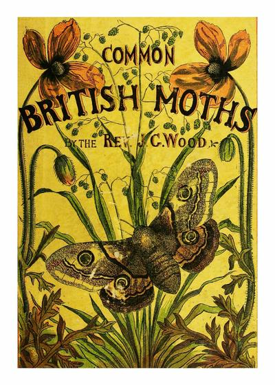 Common British moths