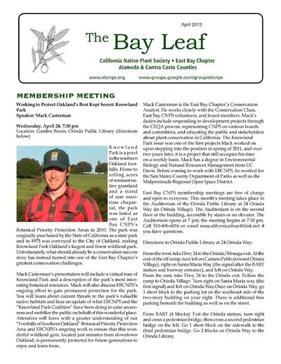 The Bay leaf.