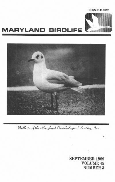 Maryland birdlife.