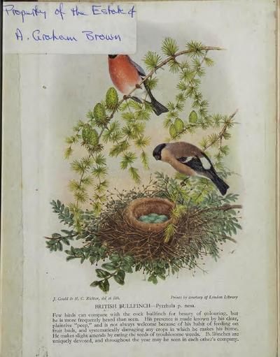 Bird day-book.