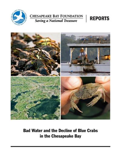 Bad water and the decline of blue crabs in the Chesapeake bay /