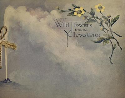 Wild flowers from the Yellowstone : a collection of wild flowers from Yellowstone National Park.