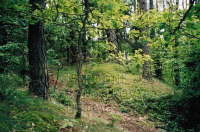 Chřešťovice, okr. PI, hradiště, celkový pohled.