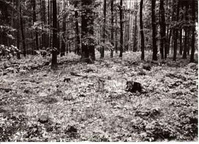 Plešnice, okres Plzeň - sever, mohylové pohřebiště Svanka, jedna z mohyl.