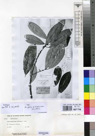 Chrysophyllum albidum G.Don