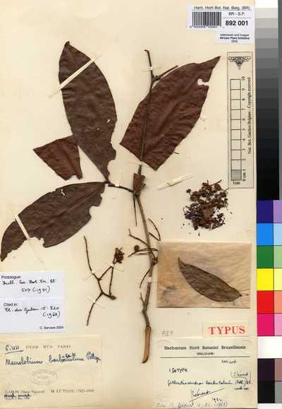 Gilbertiodendron barbulatum (Pellegr.) J.Léonard