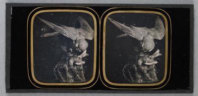 France. Daguerréotype stéréoscopique, 8,5 x 17,2 cm