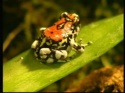 Biopat - Namens-Patenschaft für neuentdeckte Tiere