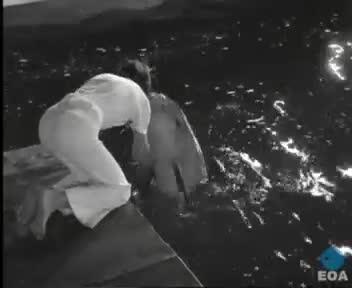 Παράσταση των δελφινιών «Φλίπερ» και «Φλίπερ Τζούνιορ» της εταιρείας «Μπούφελαντ Προντάξιον Σκάρπορω» στον Πειραιά