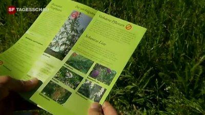 Bekämpfung exotischer Pflanzen