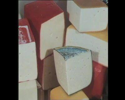 Käse und sein Nährwert /Geschichte der Milch