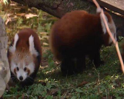Tierbabies im Zoo