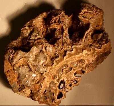 Stück eines Ammoniten mit mehreren Luftkammern und kompliziert verfalteten Kammerscheidewänden