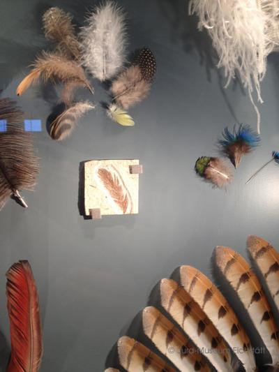 Fossile Deckfeder Tertiär