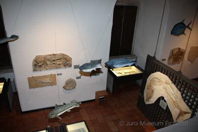 Übersicht des großen Saales des Jura-Museums
