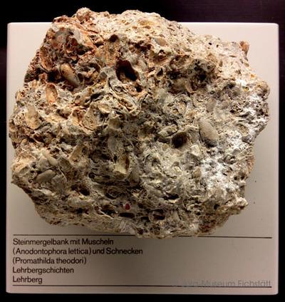 Steinmergelbank mit Muscheln