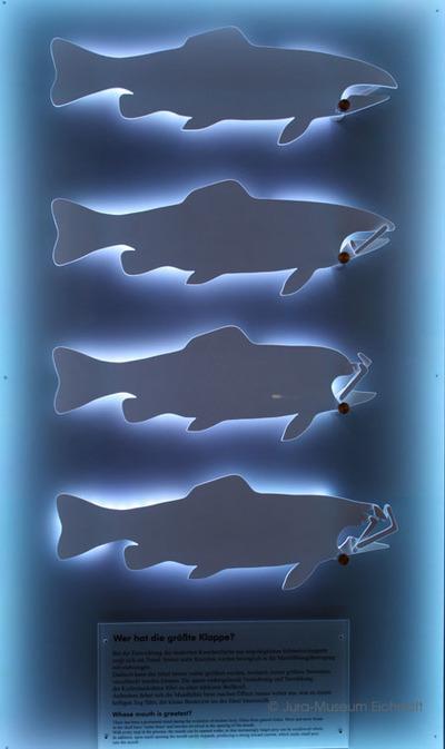 Mechanisches Modell zur Maulkinetik bei modernen Fischen