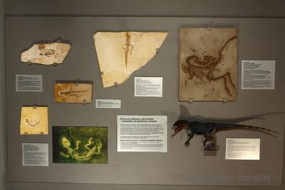 Dinosaurier, Eidechsen und Krokodile – Landreptilien des Solnhofener Archipels