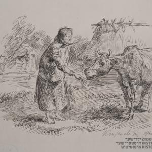 Staruszka karmiąca krowę