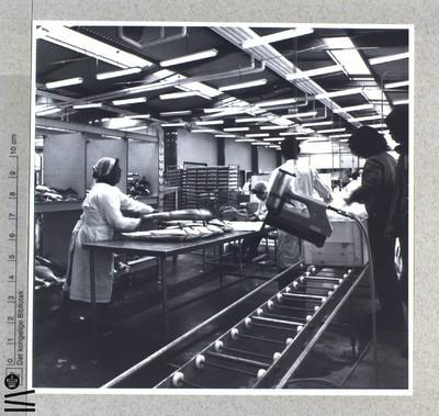 Interiør fra fabrik. Samlebånd. Fiskeindustri