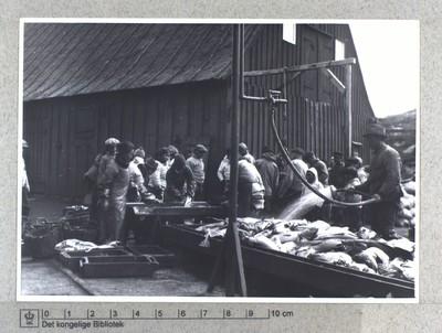 Rensning af torsk. Fiskeindustri