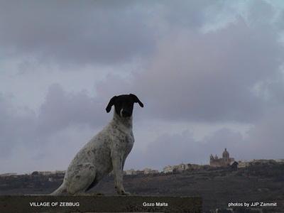 Zebbug Gozo Malta 13