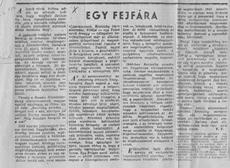 Egy fejfára - újságcikk 1957.
