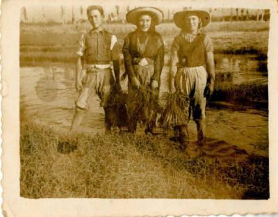 Plantadors d'arròs del Delta de l'Ebre